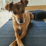 yoga Puck